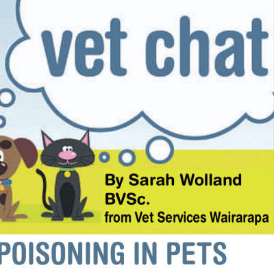 Poisoning In Pets